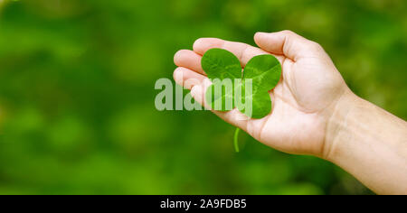 Four-leaf clover in one hand - Stock Photo
