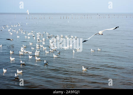 Flock of seagulls, animal in beautiful nature landscapes, many birds floating and flying on water surface of the sea at Bangpu Recreation Center, Famo - Stock Photo