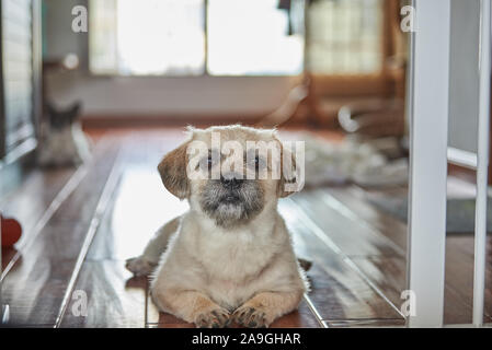 a cute puppy face close-up - Stock Photo