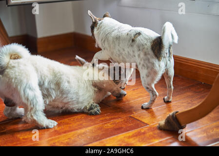 Two cute puppies are playing - Stock Photo
