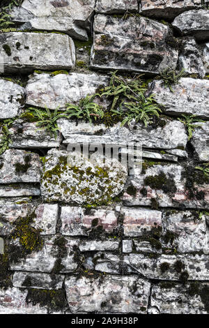 Ferns and moss growing in the crevices of a stone wall - Stock Photo