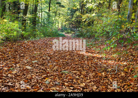Footpath covered with leaves in the forest on a sunny autumn day - Stock Photo