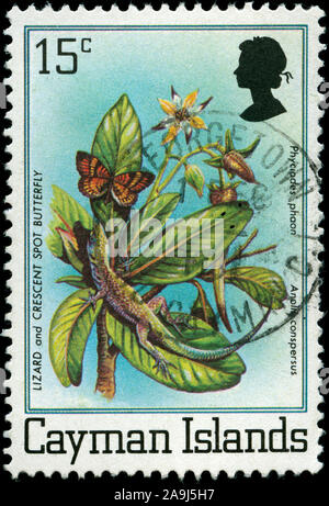 Postmarked stamp from the Cayman Islands in the Wildlife series issued in 1980 - Stock Photo