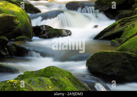 Waldbach im Boehmerwald - Stock Photo