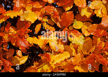 Autumn leaves and fruits in the countryside - Stock Photo