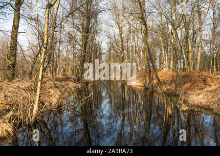 Old obsolete canal crossing wetland peat and moor nature reserve 'Mariapeel', 'de peel' in the Netherlands - Stock Photo