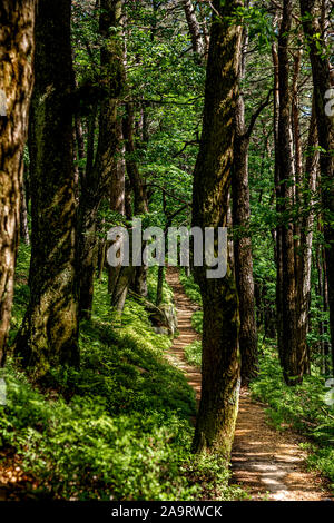 Forest pathway in the Palatinate forest in Germany - Stock Photo