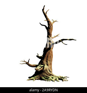 big old dead tree, isolated on white background - Stock Photo