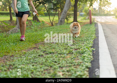 Woman exercise walking with Pomeranian dogs in park. - Stock Photo