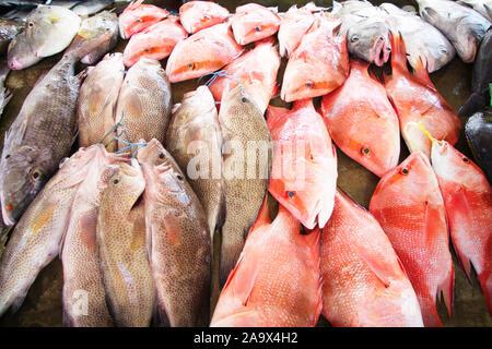 Fischmarkt Sir Selwyn Selwyn-Clarke Market in Victoria mit Red Snapper / Malabar-Schnapper / Roter Schnapper / Lutjanus malabaricus und anderen Fische - Stock Photo