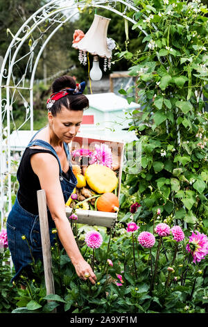 Woman standing in a garden, holding wooden crate with vegetables, picking pink Dahlias. - Stock Photo