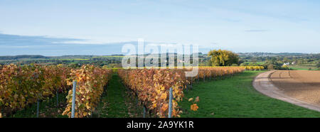 vineyard in the hills of dutch province south limburg in the fall Stock Photo