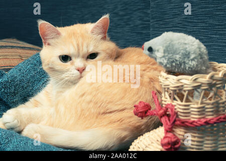 Cute cream tabby cat lies on a blue plaid next to a wicker boot and a toy mouse.