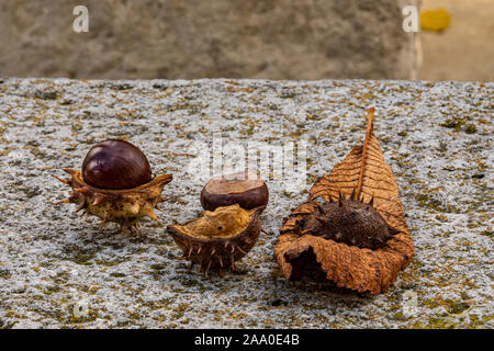 Chestnut with its husks and a dry tree leaf in the autumn season. - Stock Photo
