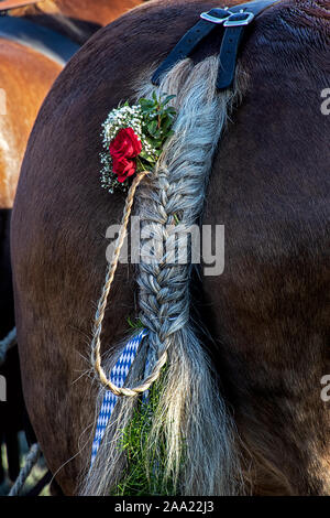 braided horse tail decorated with flowers and ribbons - Stock Photo