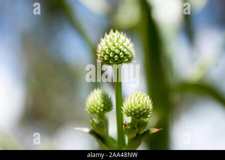 Nature in its simplest, purest form. The wild spring nature of southern Brazil. - Stock Photo