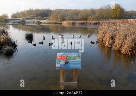 southern lake, thorley park, bishops stortford herts england uk - Stock Photo
