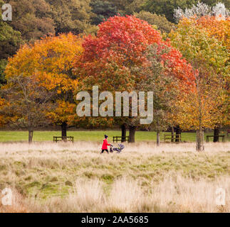 Woman in red coat and hat pushing pushchair enjoying a Autumn day out walking  in the National trust  Tatton Park parkland Knutsford Cheshire - Stock Photo