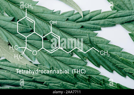 close up view of medical marijuana leaf on white background with thc molecule illustration - Stock Photo
