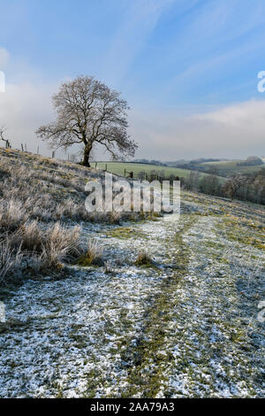 Scenic view of track across hilly field leading to solitary bare tree under blue sky (cold snowy winter day) - Gargrave, North Yorkshire, England, UK. - Stock Photo