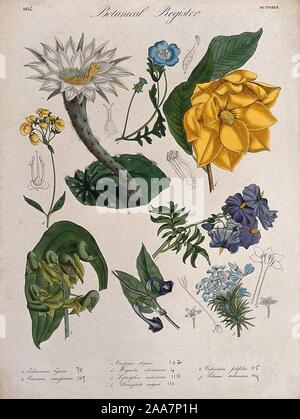 Eight plants, including an orchid, a magnolia and a cactus flowering stems. Coloured etching, c. 1834..jpg - 2AA7P1H - Stock Photo