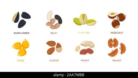 Nut seed. Nuts set in flat design. Set of different cartoon nuts. Vector - Stock Photo
