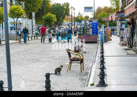 A stray cat sits in a busy street of shops in the Sultanahmet district of Istanbul Turkey. - Stock Photo