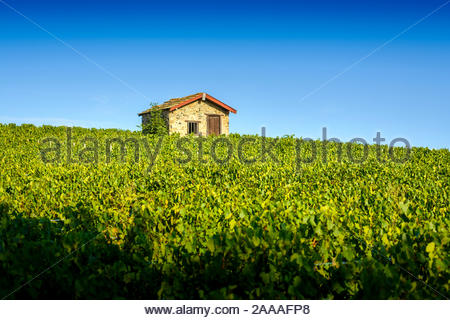 Typical hut in vineyards, Beaujolais, France - Stock Photo