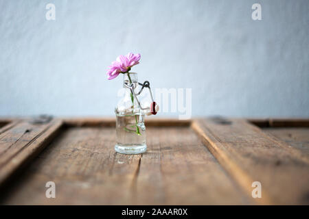 Detail of a pink aster in a small glass bottle on a cracky shabby stylish wooden furniture in front of a white wall - Stock Photo