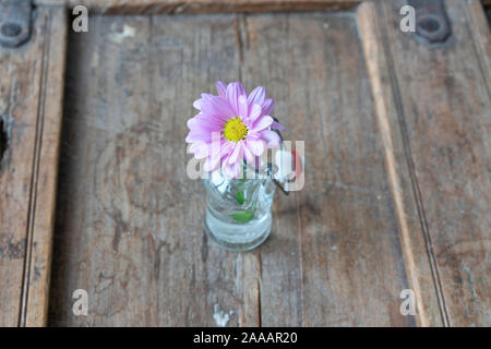 Close up of a purple summer flower in a nice glass vase on a shabby used wooden furniture - Stock Photo