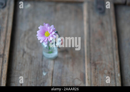 Beautiful single aster decorated in a small glass bottle on a shabby used wooden furniture - Stock Photo