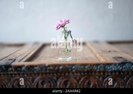 Beautiful pink aster in a small glass vase decorated on a shabby rustic wooden cabinet in front of a white wall - Stock Photo