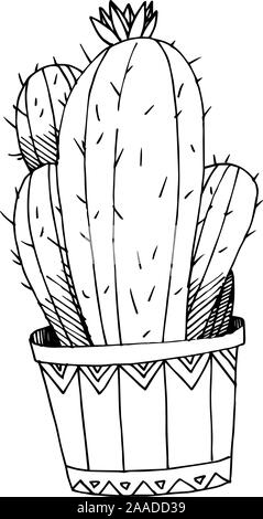 Vector Cacti floral botanical flowers. Black and white engraved ink art. Isolated cactus illustration element. - Stock Photo