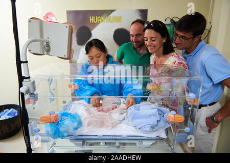 Rodolphe Delord, Managing Director, his sister Delphine Delord, Marketing Manager, and  Baptiste Mulot, Chief veterinarian, and He Ping, the keeper, looking at the newborn Giant panda (Ailuropoda melanoleuca) in the incubator, Beauval Zoo, France. August  2017 - Stock Photo