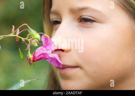 Impatiens glandulifera,Drüsiges Springkraut,Indisches Springkraut,Himalaya-Balsamine,Bauernorchidee,Familie der Balsaminengewächse (Balsaminaceae) Stock Photo