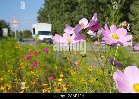 Blühstreifen an Straße - Stock Photo