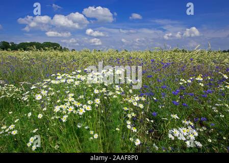 Blumen im Getreidefeld