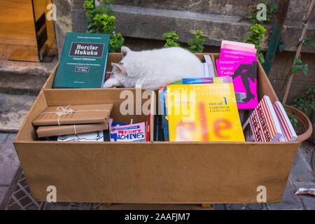 Istanbul, Turkey - September 5th 2019. A street cat sleeps in a box of books for sale outside a bookshop in the Kabatas quarter of Beyoglu, on the Eur - Stock Photo