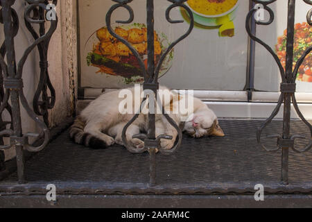 Istanbul, Turkey -September 6th 2019. A street cat sleeps outside a fast food cafe in the Tophane quarter of Beyoglu, on the European side of Istanbul - Stock Photo