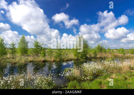Landschaft mit Wollgras