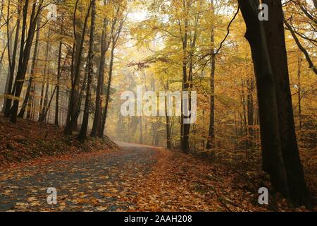 Path through the autumnal forest. - Stock Photo