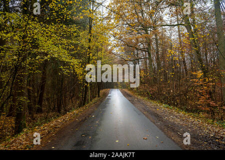Narrow country road through the autumn forest with colorful leaves and a wet, muddy asphalt surface, danger of slipping when driving, safety transport - Stock Photo
