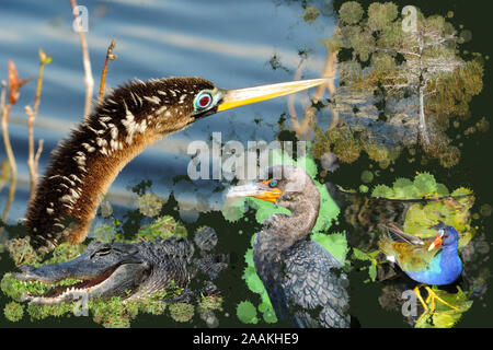 Wildlife of the Everglades National Park - Image-Montage of Birds, Alligator, Flowers and Butterfly - Stock Photo