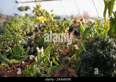 Houseplants growing in a greenhouse. - Stock Photo