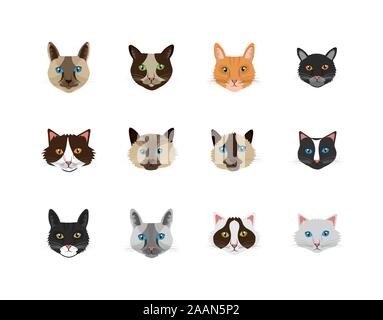 bundle faces of cats feline animals icons - Stock Photo