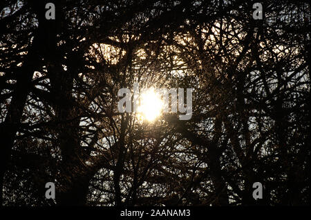 UK Autumnal early morning autumn sun rising in silhouette through the leafless trees with sun rays - Stock Photo