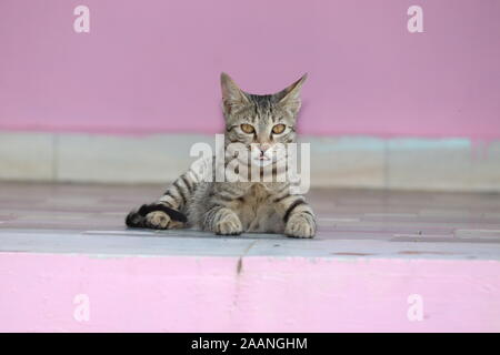 Cute tabby cat with blue eyes and long whiskers looks at camera with a sweet expression. Close-up portrait of a beautiful cat laying indoors. - Stock Photo