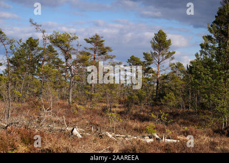 Schweden; Moor; Kuleskog; Fruehjahr - Stock Photo