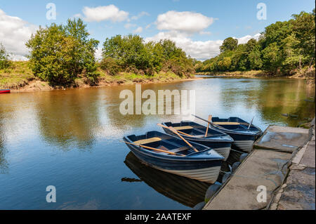 Three blue and white rowing boats moored on a tranquil river on a sunny day - Stock Photo