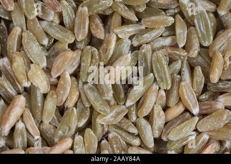 Dinkel, Spelz (Triticum spelta), Gruenkern, Koerner | spelt wheat (Triticum spelta), unripe spelt grain, grains | BLWS035021.jpg [ (c) blickwinkel/fot - Stock Photo